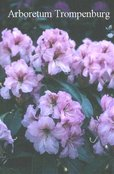 Rhododendron 'Duftauge'