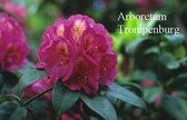 Rhododendron 'Kate Waterer'
