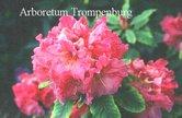 Rhododendron 'Kubla Khan'